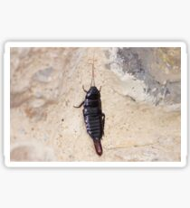insect. Sticker