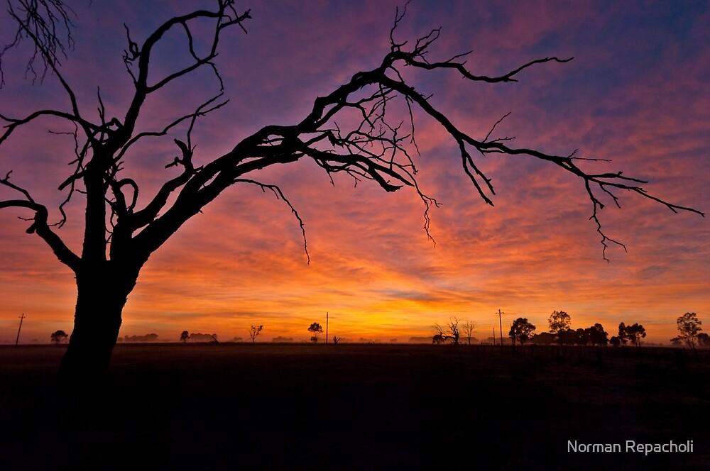 Old Tree Sunrise - Tongala Victoria Australia by Norman Repacholi