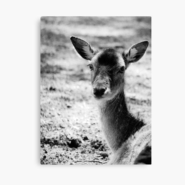 more monochome deer Leinwanddruck