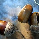 Acorns Three by LouJay