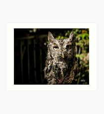 Boudreaut the Eastern Screech Owl Art Print