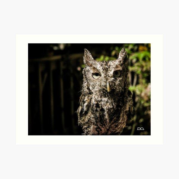 Boudreaut the Eastern Screech Owl Art Print