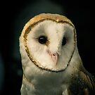 Oberon the Barn Owl by InRC