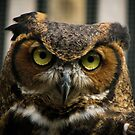 Mowgli the Great Horned Owl by InRC