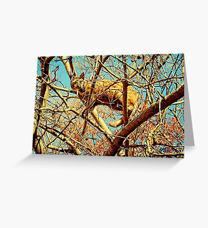 """""""HEAD FOR THE HILLS, I mean branches""""... prints and products Greeting Card"""