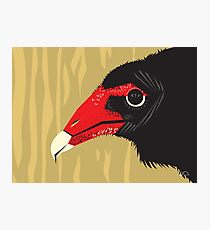 Crikey the Turkey Vulture Photographic Print