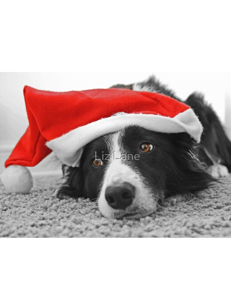 Border Collie Christmas Card - Santa\'s Little Helper\