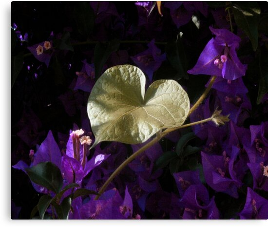 A Heart of Gold Leaf of Morning Glory by taiche