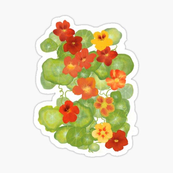 Sunny Nasturtiums  Sticker