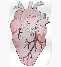 anatomical heart Poster