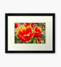 On Fire Tulips Framed Print