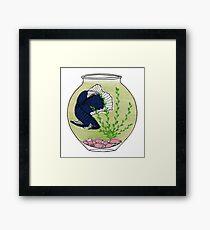 Bettafish Bowl Framed Print