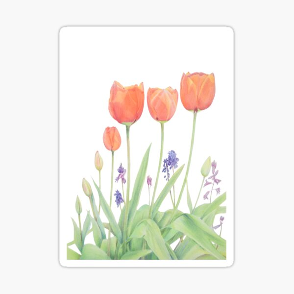 Tulips in Spring Art Coloured Pencil Drawing Sticker