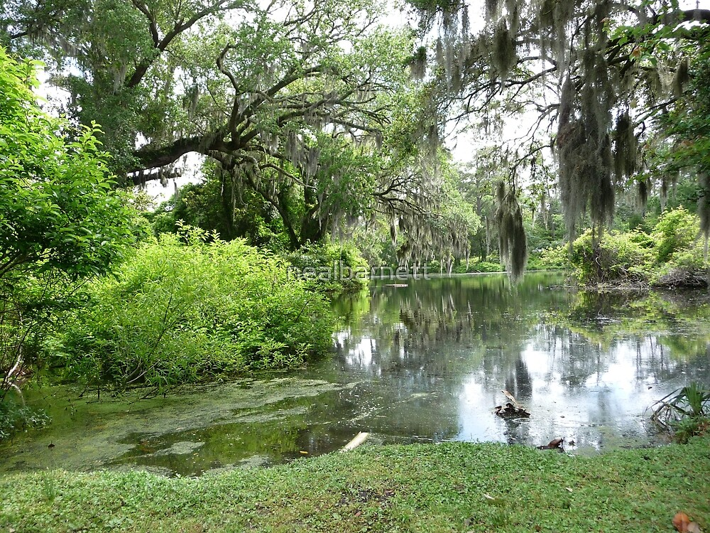 Southern Tranquility by nealbarnett