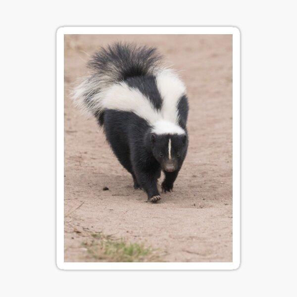 Skunk has right of way Sticker