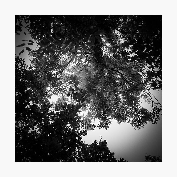 Up No. 12 Photographic Print