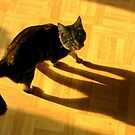 Cats Shadow Play by ienemien