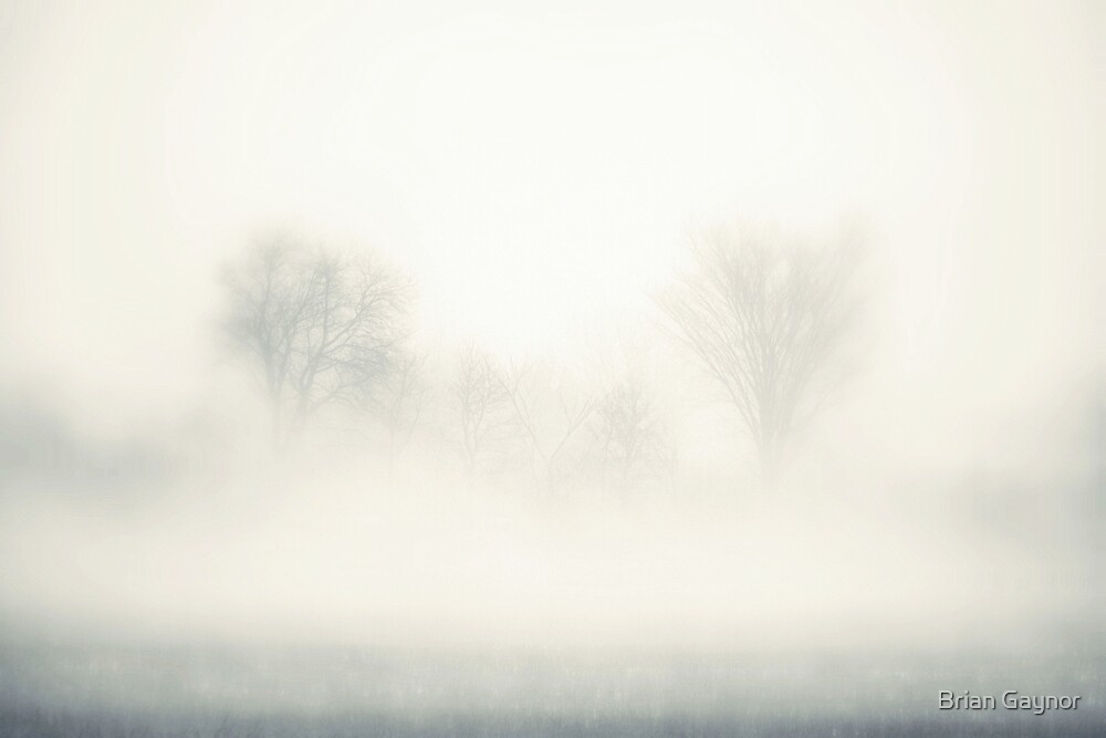 Trees Greet the Fog by Brian Gaynor