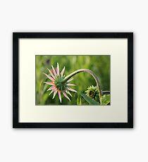 Pink Flower and Stem Framed Print