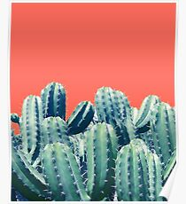 Cactus on Coral #redbubble #lifestyle Poster