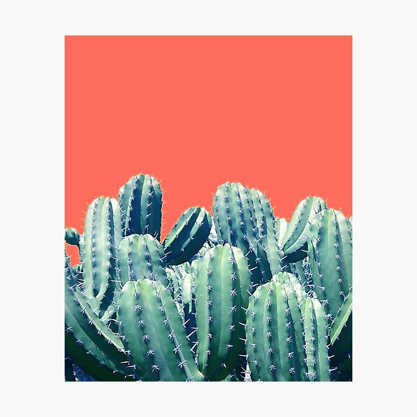 Cactus on Coral #redbubble #lifestyle Photographic Print