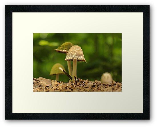 Eye Level Mushroom  by Gary Horner