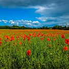 Field of Red by vivsworld