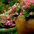 Container Plants - II       ^ by ctheworld