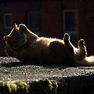 Cat aerobics by turniptowers