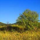 Country Landscape by jean-louis bouzou