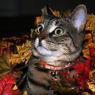 Baby Tasha in leaves by jodi payne