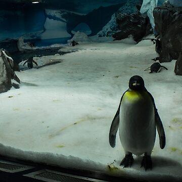 Penguin Portrait by danielcoe