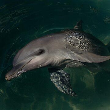Dolphin Portrait by danielcoe