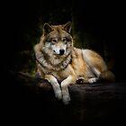 wolf by Nicole W.