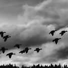 Nisqually Homecoming by Tom Vaughan