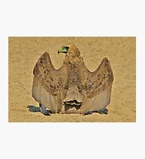 Bateleur Eagle - Wings of Beauty from Africa Photographic Print