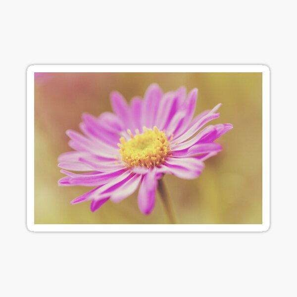Vintage Aster Flower Sticker