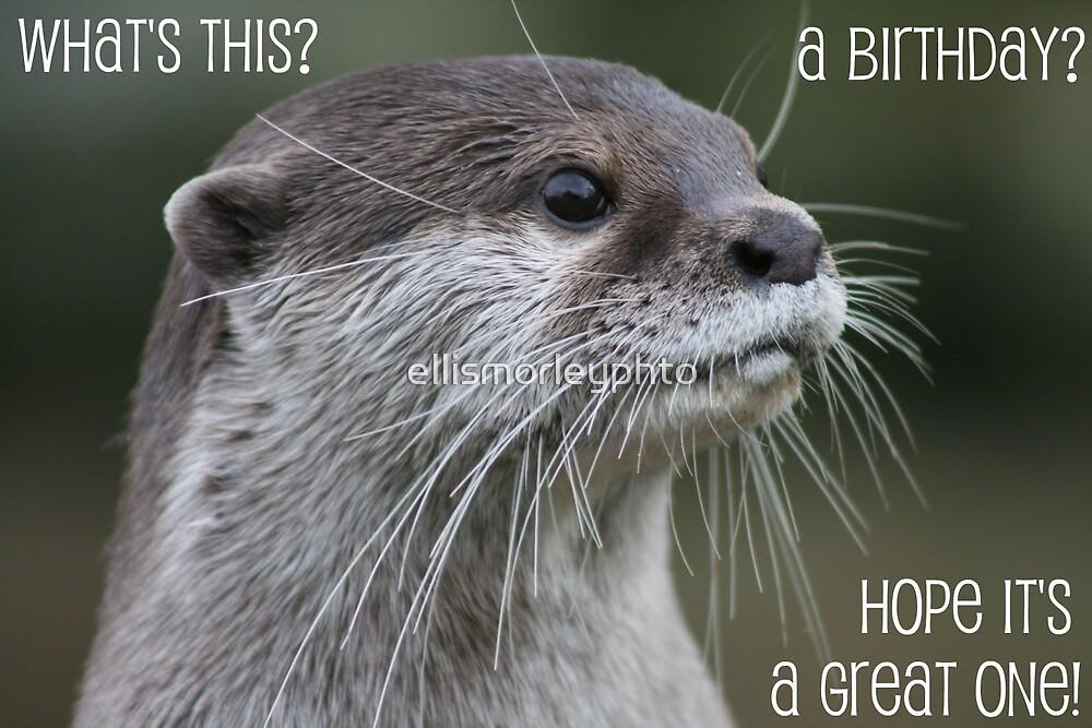 Otter birthday card by ellismorleyphto