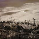 The Corner Paddock  by Virginia McGowan