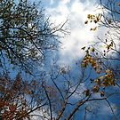 Autumn Sky by doval