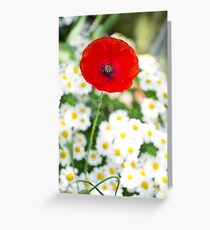 Meanwhile, in the daisies... Greeting Card