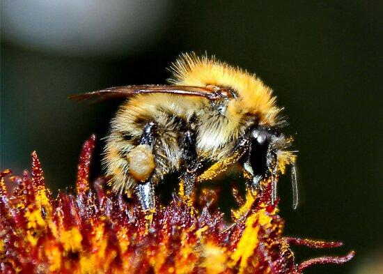 The Pollenater by AnnDixon