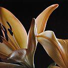 In the Soft Sunlight by Lozzar Flowers & Art