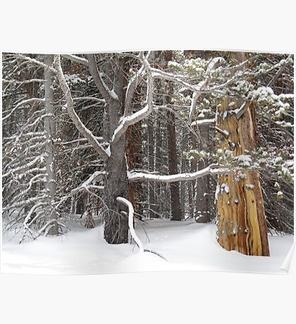 Tree Talk Poster