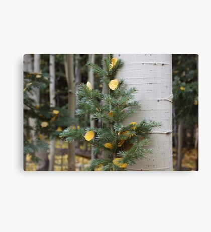 Two Trees in Love Canvas Print