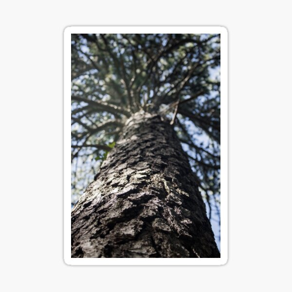 A Treetop  Sticker