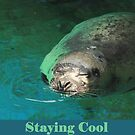 Staying Cool by Thomas Murphy