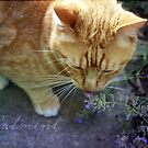 Catmint by Lynn Starner