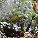 Wild Tasmania by Judi Rustage