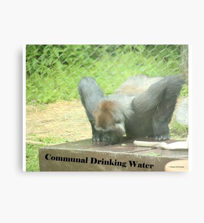 Communal Drinking Water Metal Print